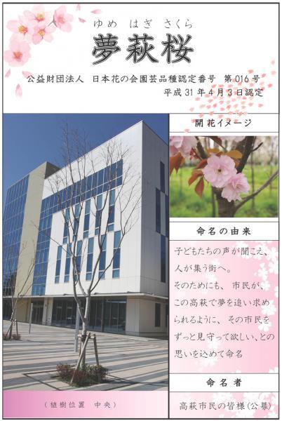『夢萩桜』の画像