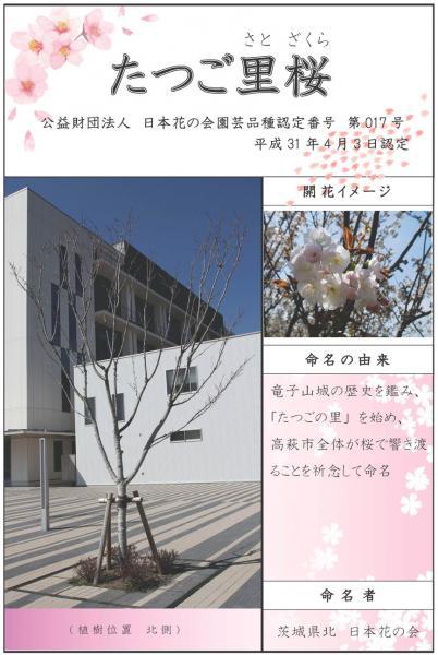『たつご里桜』の画像