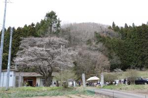 『ひとまち千年桜を観る会1』の画像