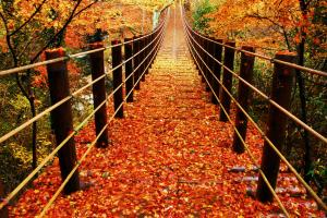 『花貫渓谷【吊り橋】』の画像