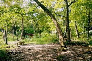 『小滝沢亜キャンプ場(紹介)』の画像